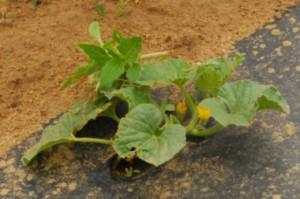cantplant